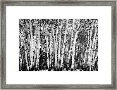 Pillars Of The Wilderness Framed Print by James BO Insogna