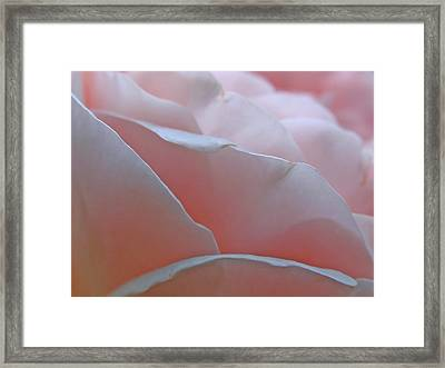 Pillow Petals Framed Print