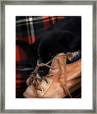 Pillow Framed Print by Skip Willits