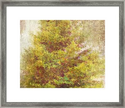 Pinaceae Framed Print