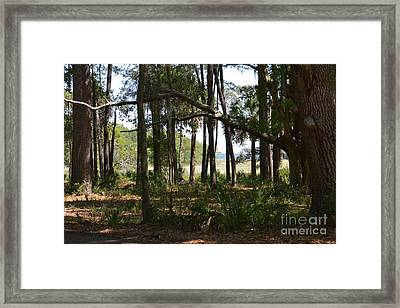 Framed Print featuring the photograph Pinckney Island by Carol  Bradley