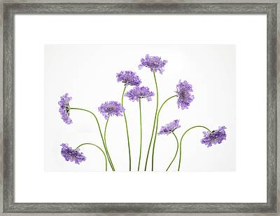 Pincushion #2 Framed Print by Rebecca Cozart