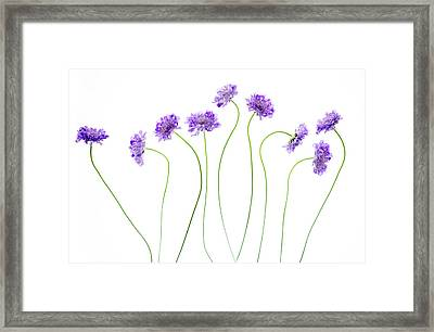 Pincushion #4 Framed Print by Rebecca Cozart