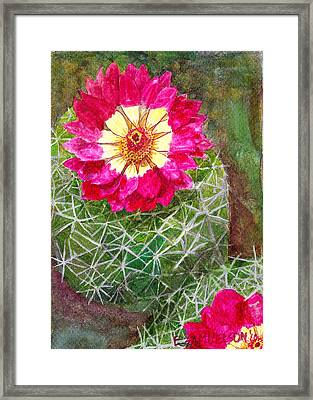 Pincushion Cactus Framed Print