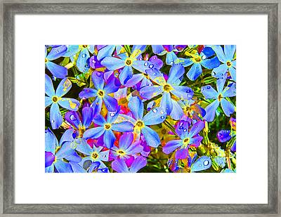 Pincushion Flower Framed Print by Heather Coen
