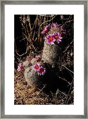 Pincushion Framed Print by John Gee