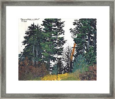 Pine And Fir Tree Forest Framed Print