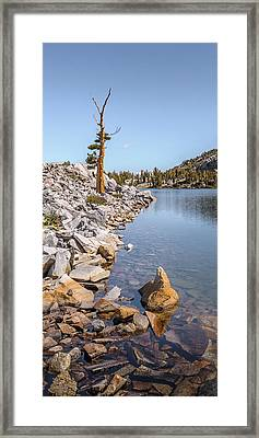 Framed Print featuring the photograph Pine And Rock by Alexander Kunz