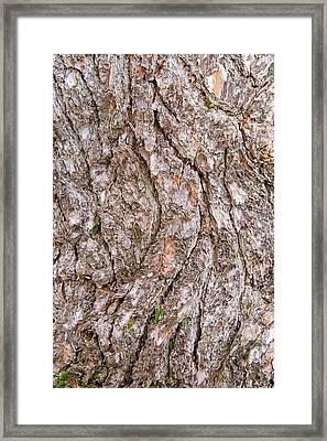 Framed Print featuring the photograph Pine Bark Abstract by Christina Rollo