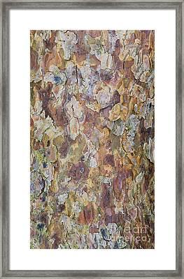 Pine Bark Framed Print by Tim Gainey