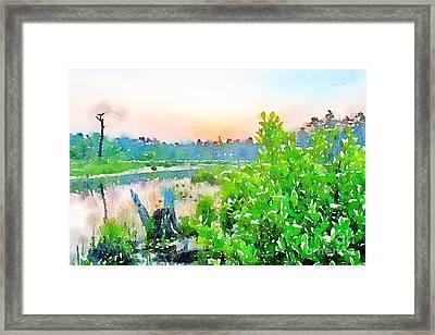Pine Barren Wetlands New Jersey Framed Print by John Castell
