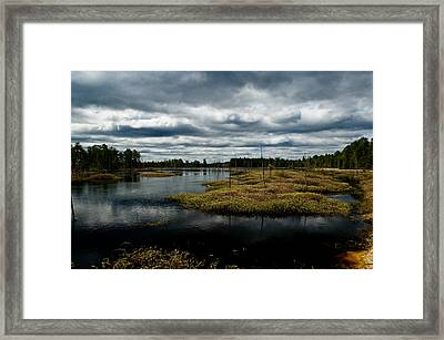 Pine Barrens Framed Print by Louis Dallara