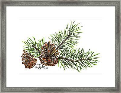 Pine Branch Framed Print