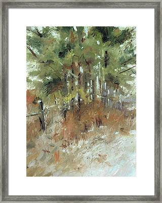 Pine Cluster Framed Print