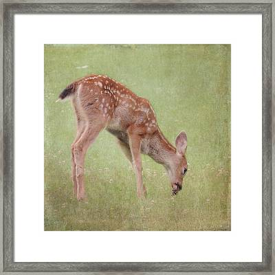 Framed Print featuring the photograph Pine Cone Lunch by Sally Banfill