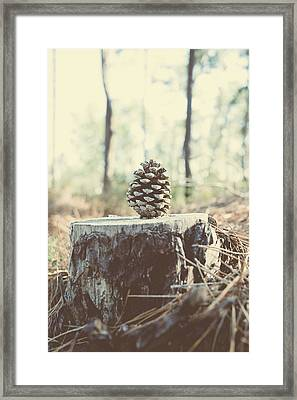 Pine Cone Framed Print by Marco Oliveira