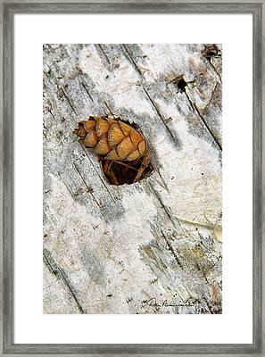 Pine Cone On Birch Bark 8021 Framed Print