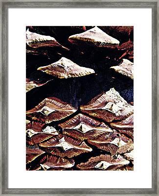 Pine Cone Framed Print by Sarah Loft