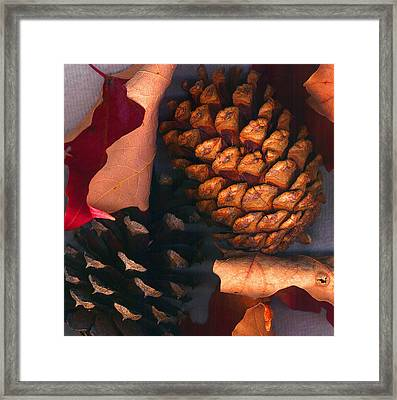 Pine Cones And Leaves Framed Print by Nancy Mueller