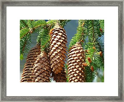 Pine Cones Art Prints Conifer Pine Tree Landscape Baslee Troutman Framed Print by Baslee Troutman