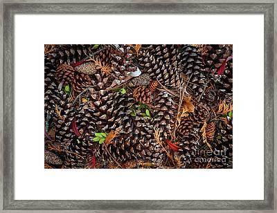Pine Cones Framed Print by Elena Elisseeva