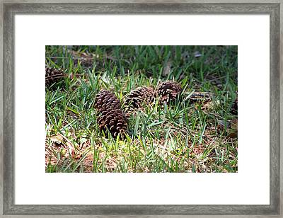 Pine Cones Framed Print by Evelyn Patrick