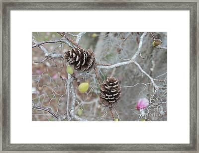 Pine Cones In Gray Framed Print by Carol Groenen