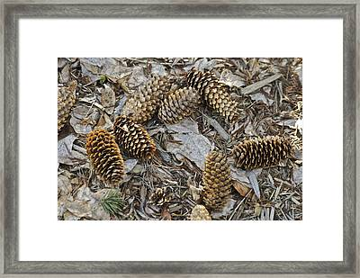 Pine Cones Framed Print by Michael Peychich