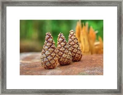 Pine Cones Framed Print by Veikko Suikkanen