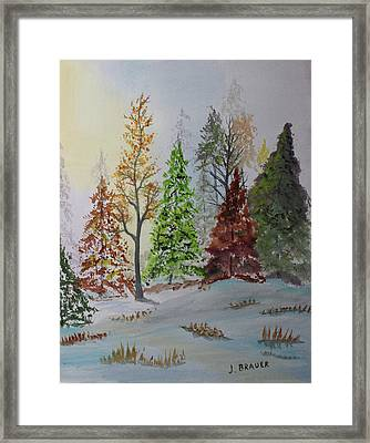 Pine Cove Framed Print by Jack G Brauer