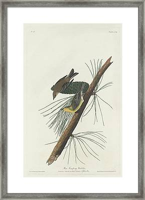 Pine Creeping Warbler Framed Print by Rob Dreyer