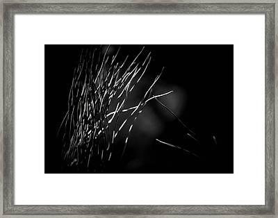 Pine Fingers Framed Print