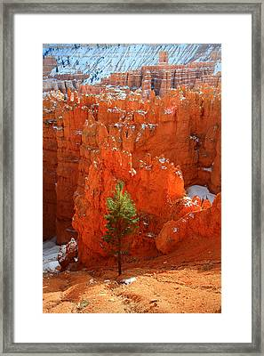 Pine Hoodoos At Bryce Canyon Framed Print by Pierre Leclerc Photography