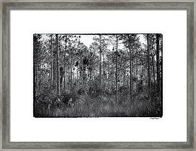 Pine Land In B/w Framed Print by Rudy Umans
