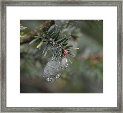 Pine Framed Print by Mary Zeman