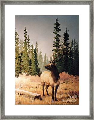 Pine Meadow Elk Framed Print by JoAnne Corpany
