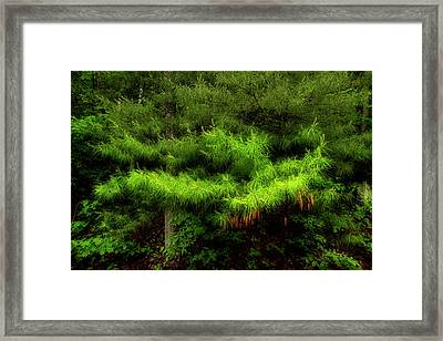 Pine Framed Print by Mike Eingle