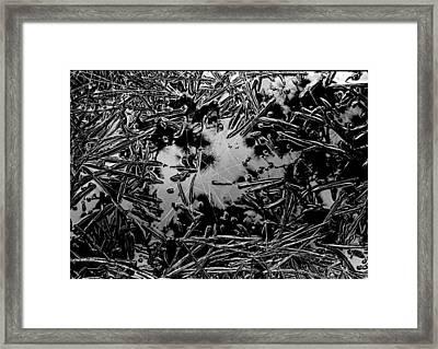 Pine Needle Rain Framed Print