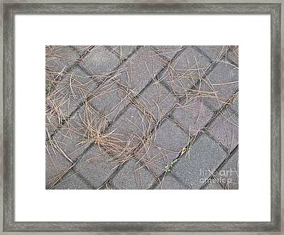 Pine Needles And Paving Stones Framed Print by Ann Horn