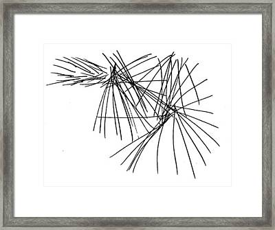 Pine Needles Framed Print by Dick Sauer