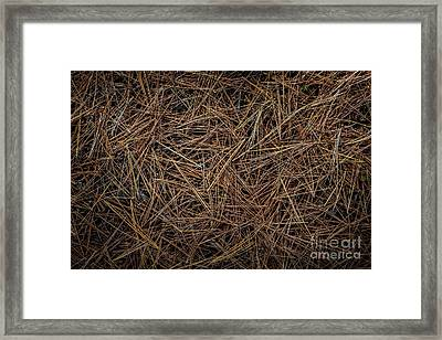 Pine Needles On Forest Floor Framed Print