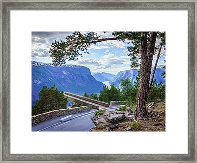 Framed Print featuring the photograph Pine On Stegastein by Dmytro Korol