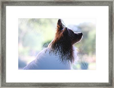 Pine Pap Framed Print