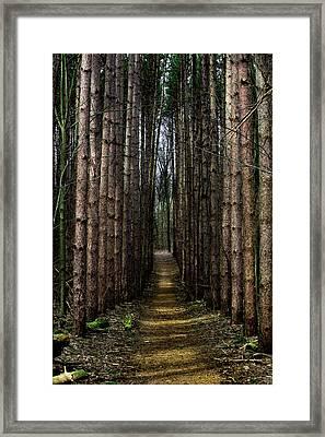 Pine Path  Framed Print