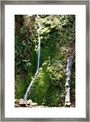Pine Ridge Trail - Ventana Wilderness Framed Print