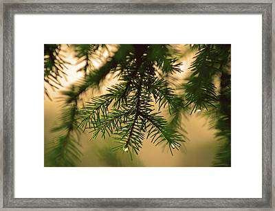 Framed Print featuring the photograph Pine by Robert Geary