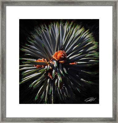 Pine Rose Framed Print