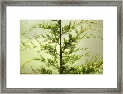 Framed Print featuring the photograph Pine Shower by Brian Wallace