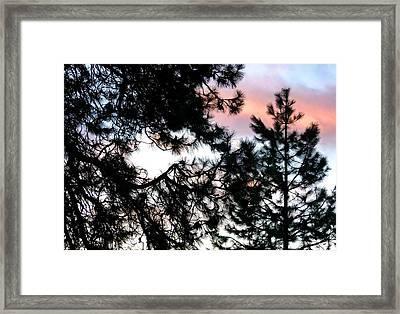 Pine Silhouettes At Sundown Framed Print