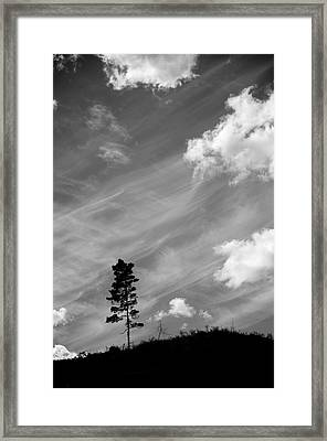 Pine Silhouettes Framed Print by Tommytechno Sweden
